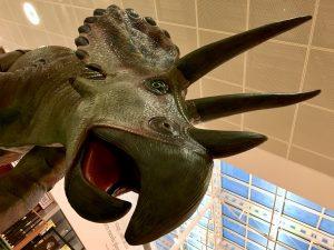 Stegosaurus Dinosaur Galleries Shopping Washington Summer holidays free